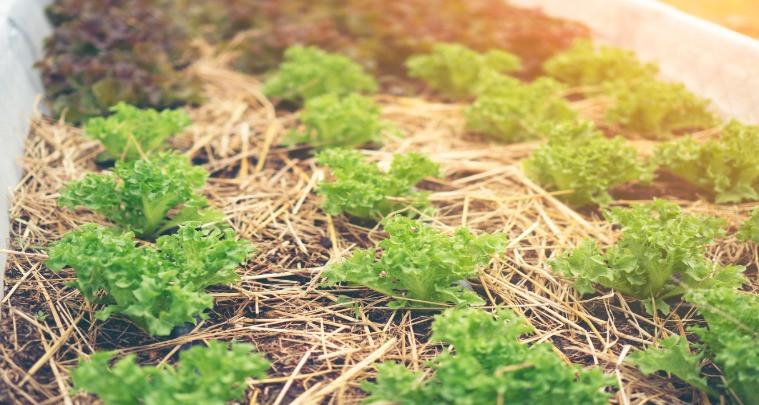 Faire de la permaculture chez soi simplement