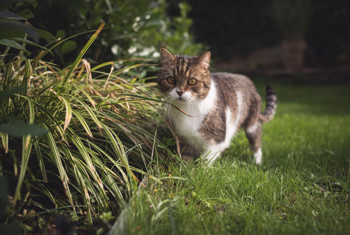 Chat qui fait ses besoins dehors