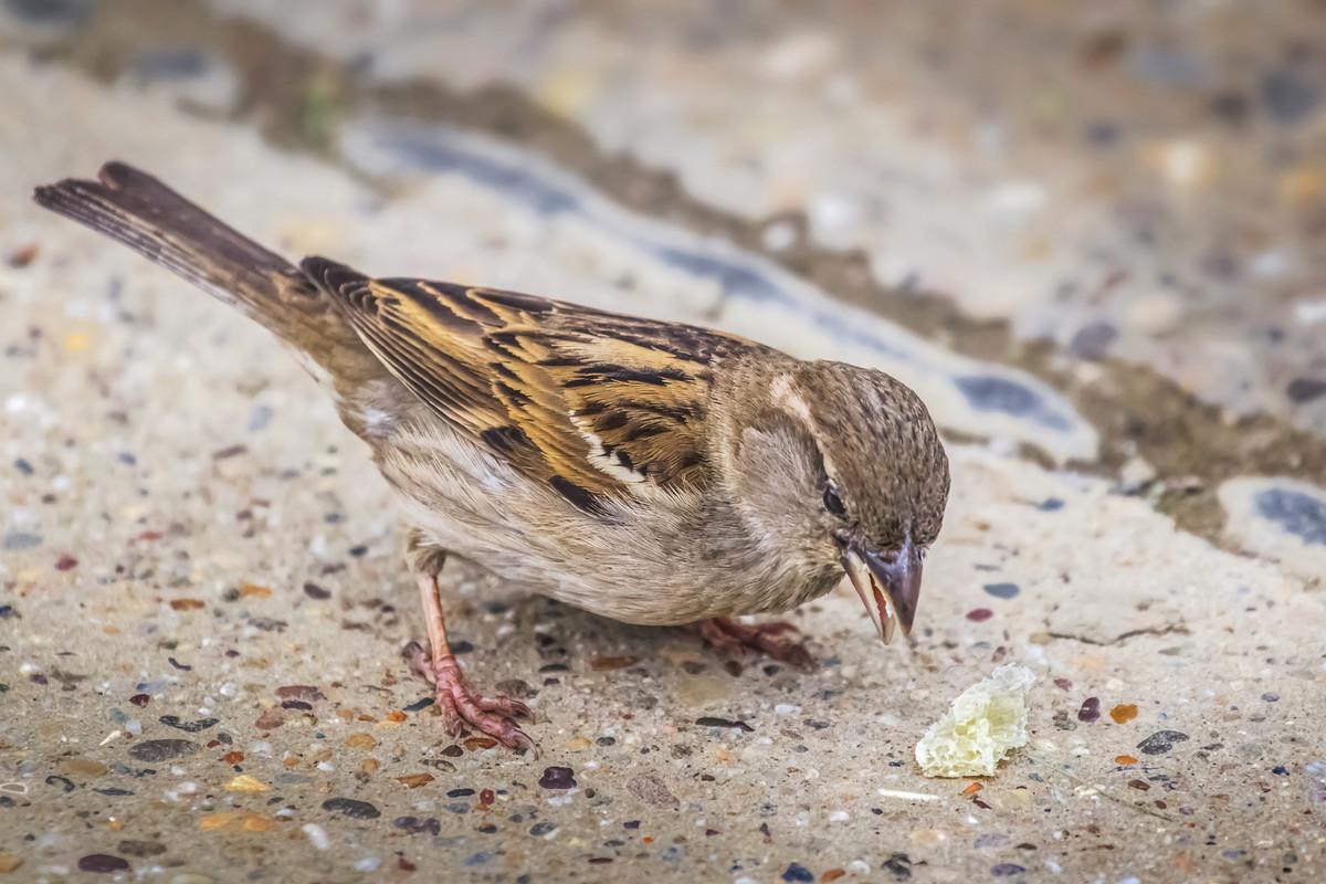 Donner du pain aux oiseaux