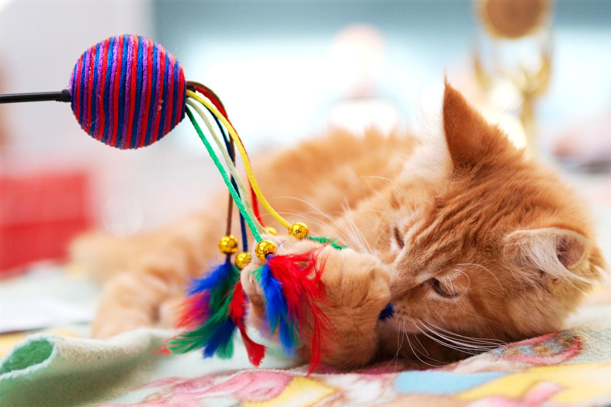 Jouet pour chat zéro déchet