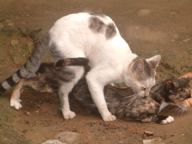Chat catastrophe écologique