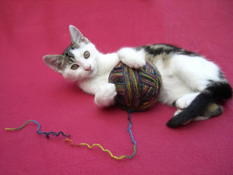 Chat qui joue avec une pelote de laine