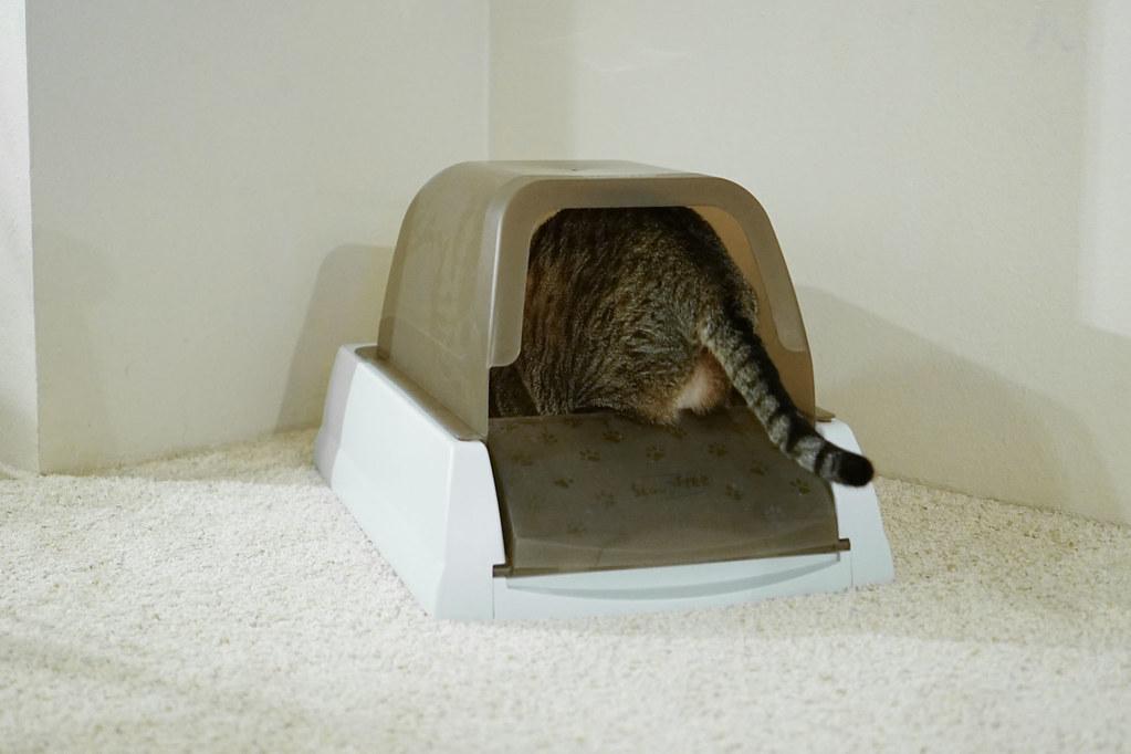 Litière écolo pour chat