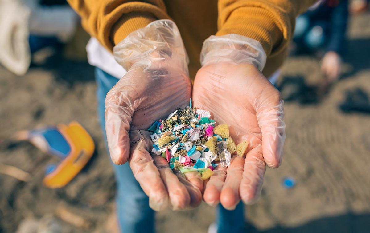 Microplastiques et animaux marins