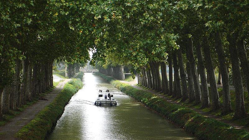 Voies navigables de France lance un appel aux dons pour replanter les arbres du canal du Midi