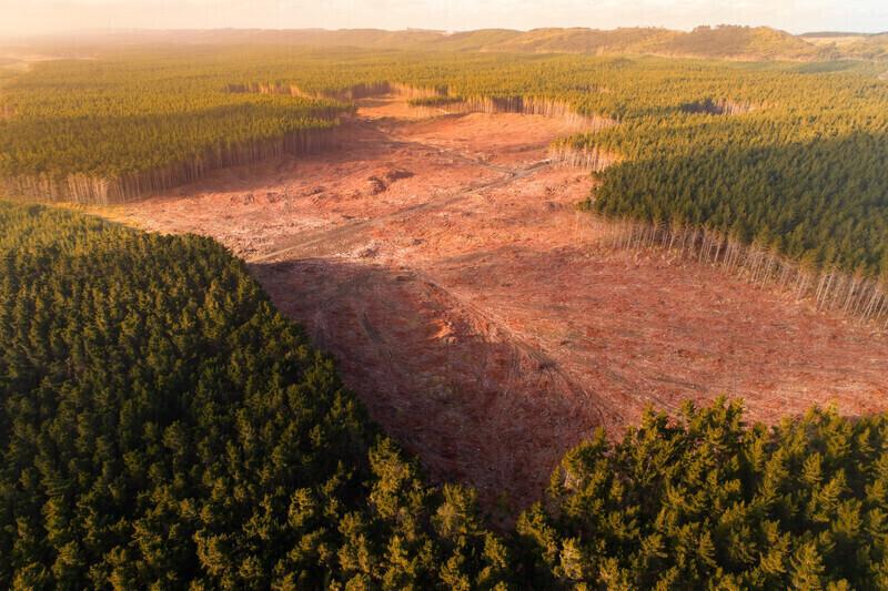 Biodieselà l'huile de palme: La fausse bonne idée!