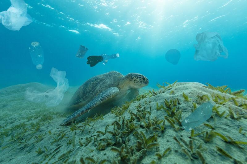 Make.org organise la consultation «Comment agir ensemble dès maintenant pour l'environnement?»
