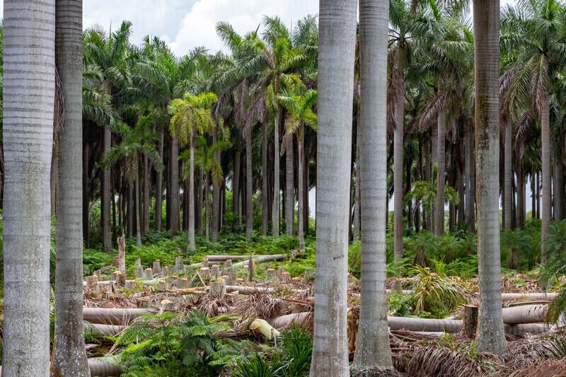 Huile de palme dans les biocarburants: l'Assemblée nationale a tranché