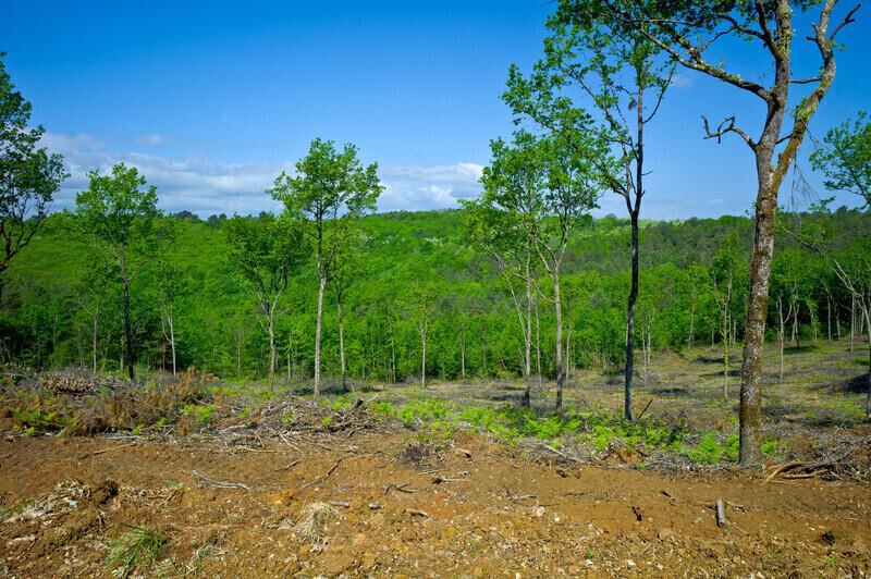 Stop au «massacre à la tronçonneuse» dans nos forêts: La pétition adressée à la ministre de l'Écologie