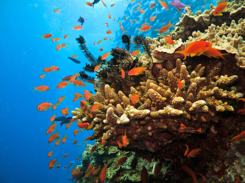 Grande barrière de corail: Les observations effectuées pendant la période de reproduction2019 sont encourageantes
