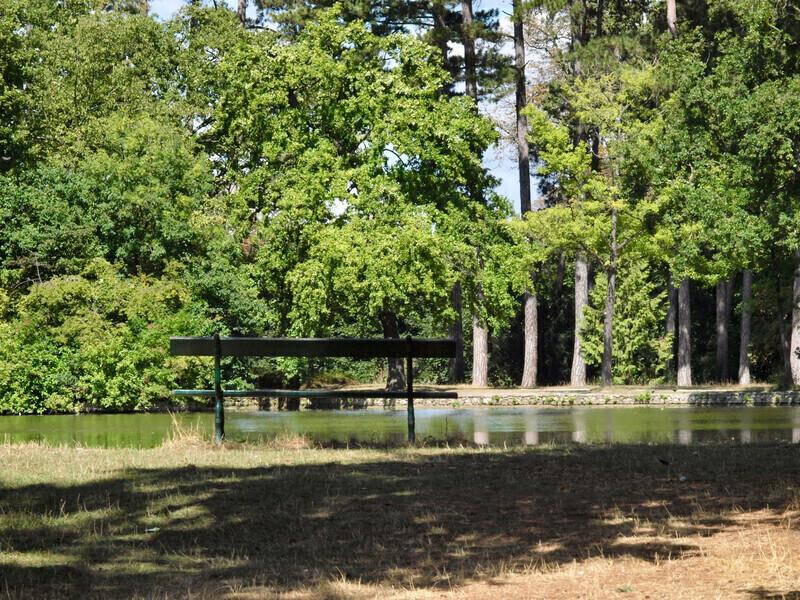 Des experts recherchent les arbres les plus rafraîchissants et résistants aux fortes chaleurs