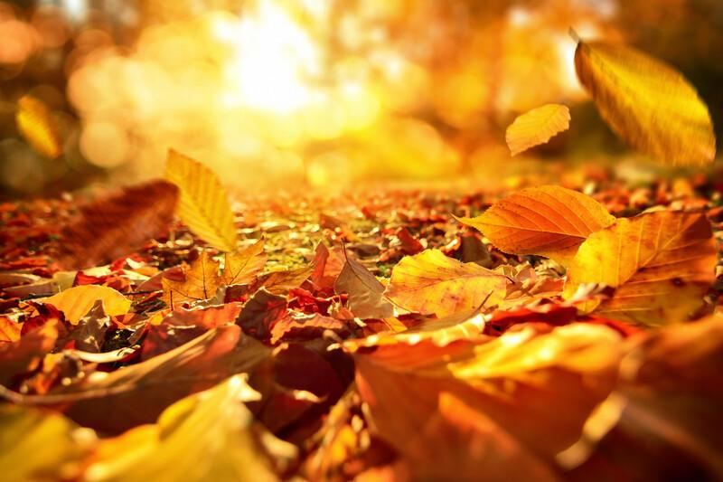 Se chauffer grâce aux feuilles mortes, un pari réussi pour la ville d'Amiens