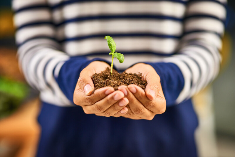 Graine Cup: Un gobelet biodégradable qui fait pousser des fleurs
