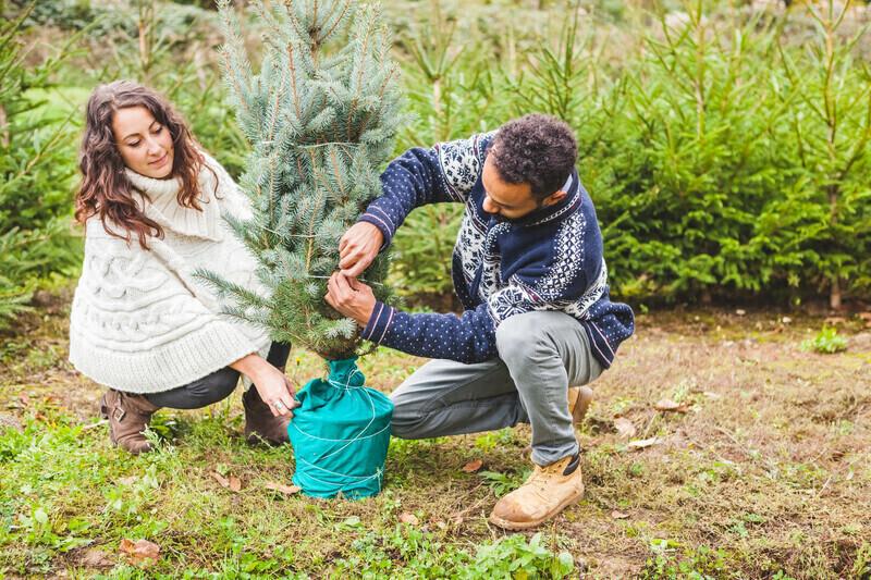 Louer son sapin de noël, l'alternative zéro déchet d'un paysagiste ornais