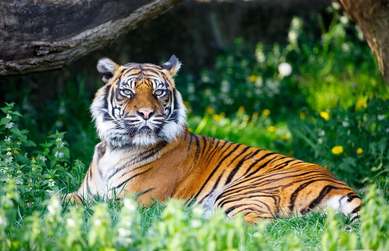 Le journaliste Hugo Clément appelle aux dons pour le rachat d'un zoo du Morbihan