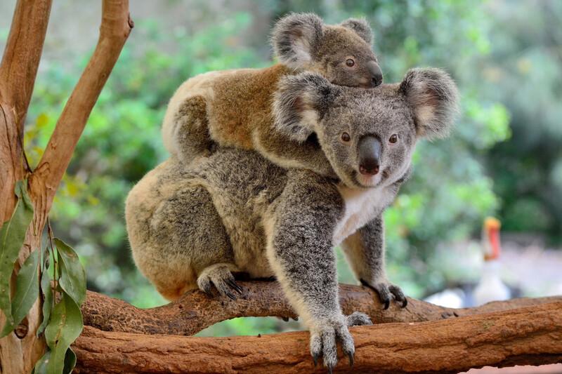 WWF France collecte des fonds pour les animaux d'Australie
