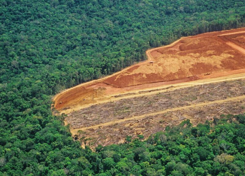 Brésil: Les chiffres alarmants de la déforestation amazonienne en 2019