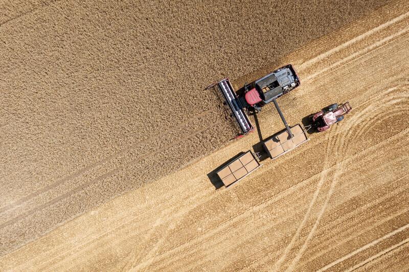 Le réchauffement climatique pourrait causer des pénuries de blé