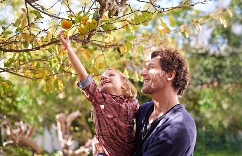 Des arbres fruitiers gratuits et en libre accès dans les rues de Copenhague