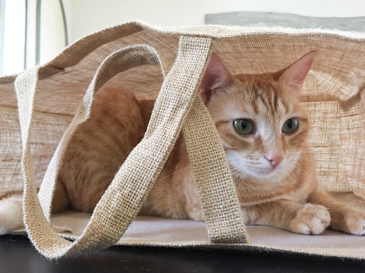 Avoir un chat zéro déchet : 5 bonnes astuces écolos au quotidien