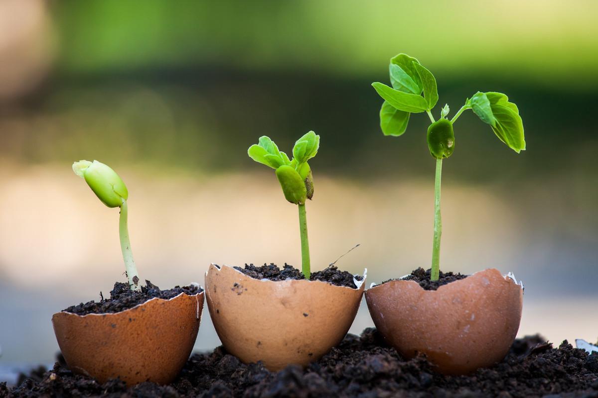 7 idées de réutilisation de ses coquilles d'œufs dans le jardin