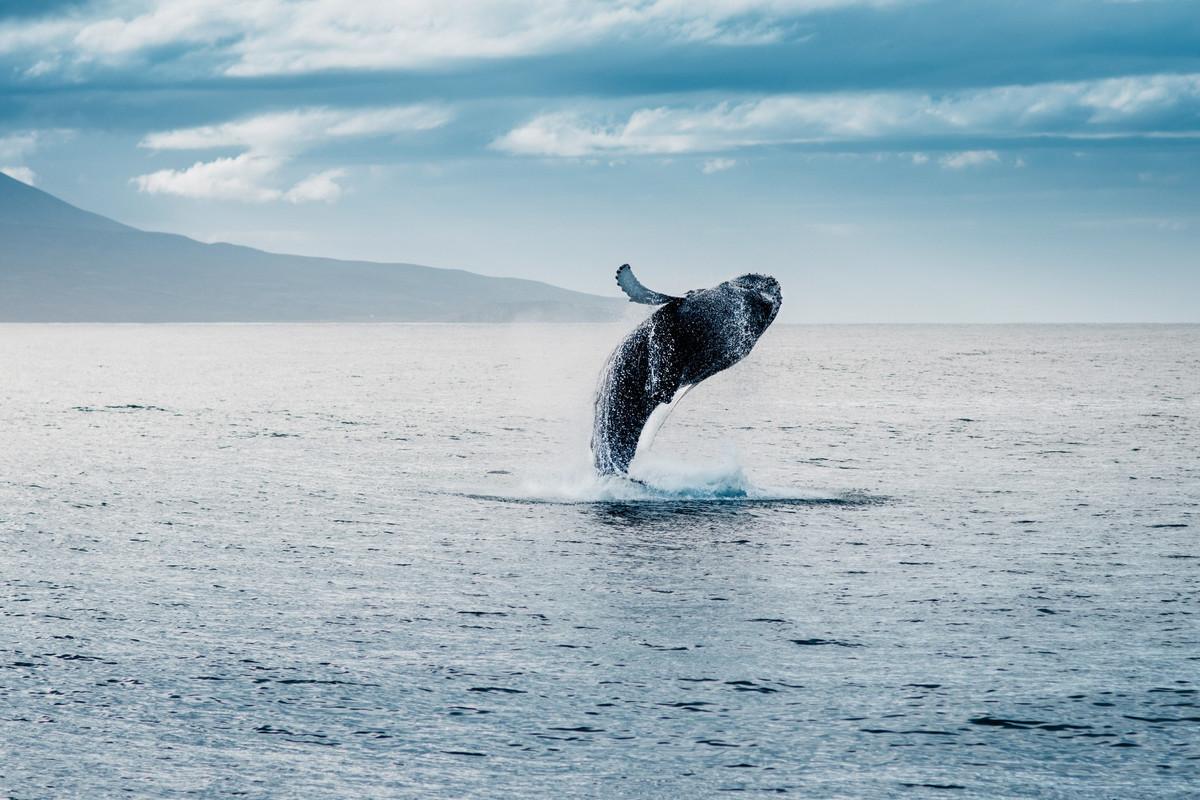 Les pêcheurs islandais ne chasseront pas la baleine cet été