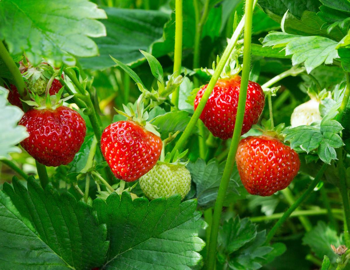 Agricool cultive des fruits et légumes dans des containers à La Courneuve