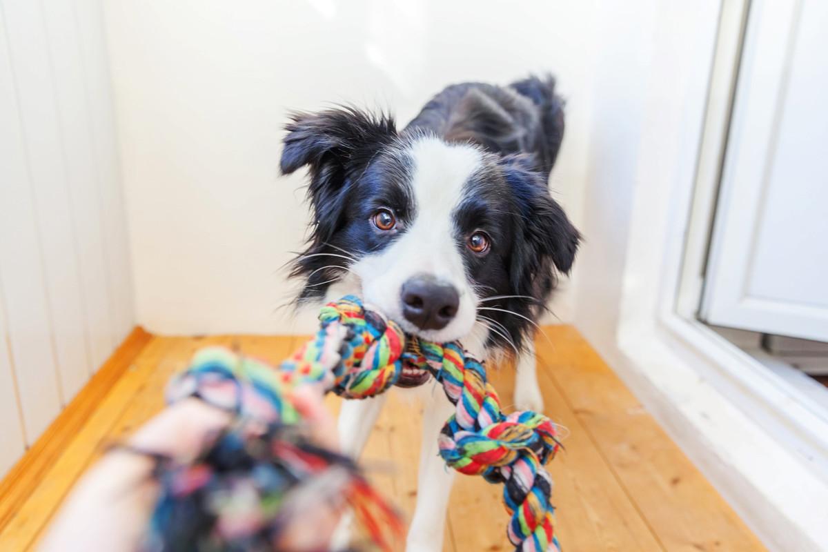 DIY: 9 jouets et accessoires pour chiens