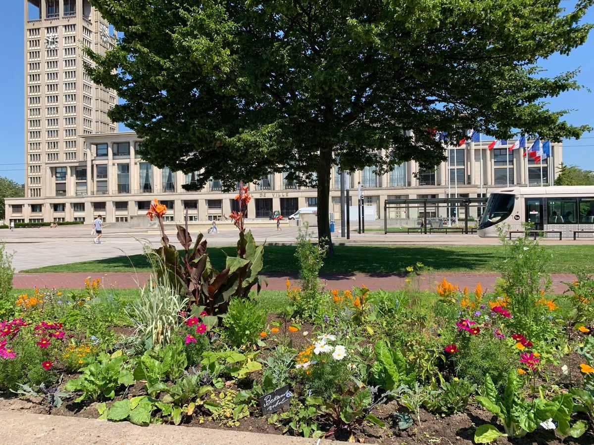 La ville du Havre crée un potager urbain ouvert à tous ses habitants