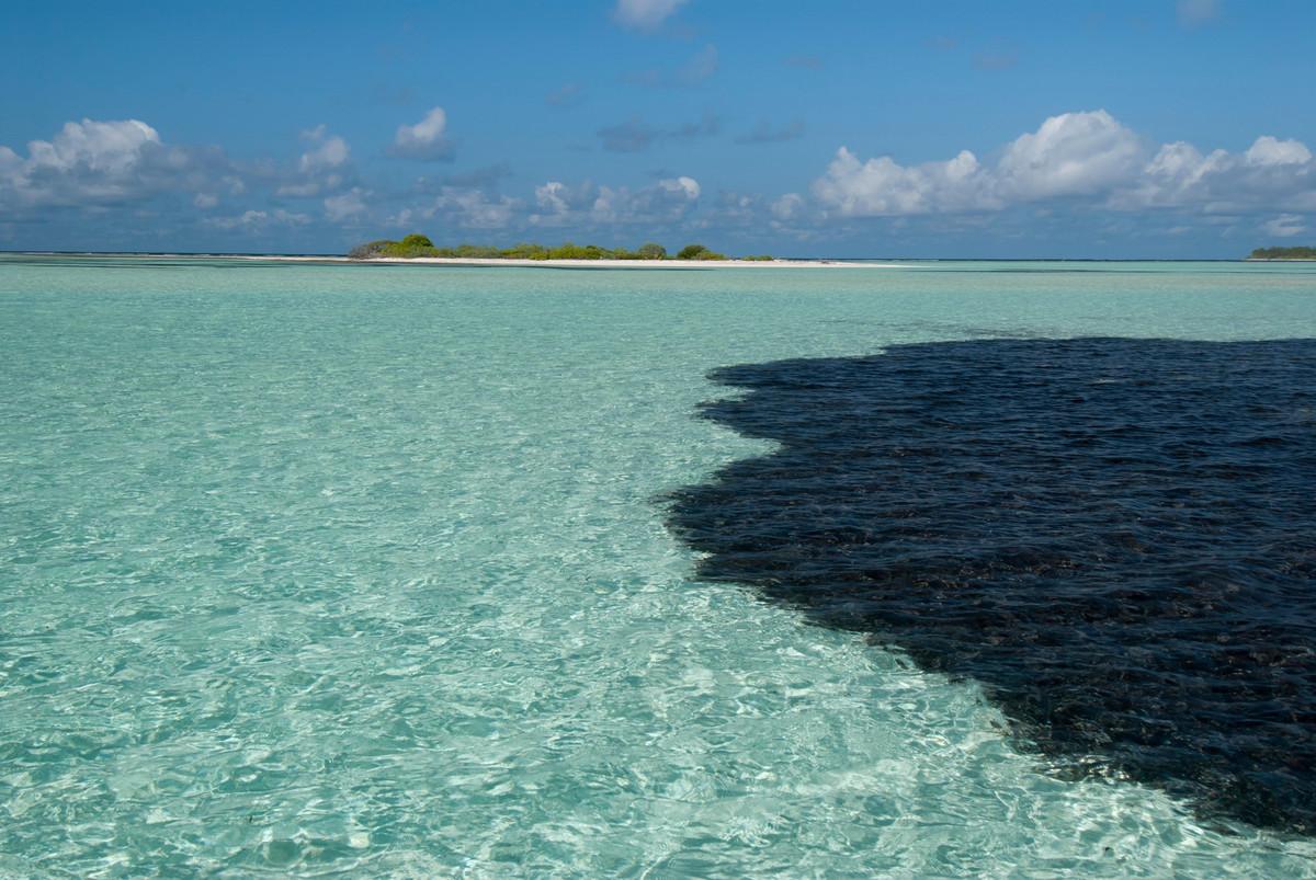 Des chercheurs inventent une éponge capable d'absorber le pétrole des océans