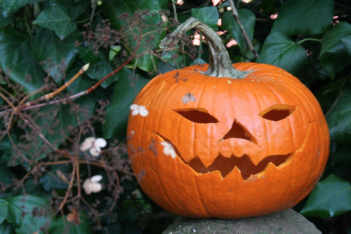 Faire Une Citrouille D Halloween Zero Dechet
