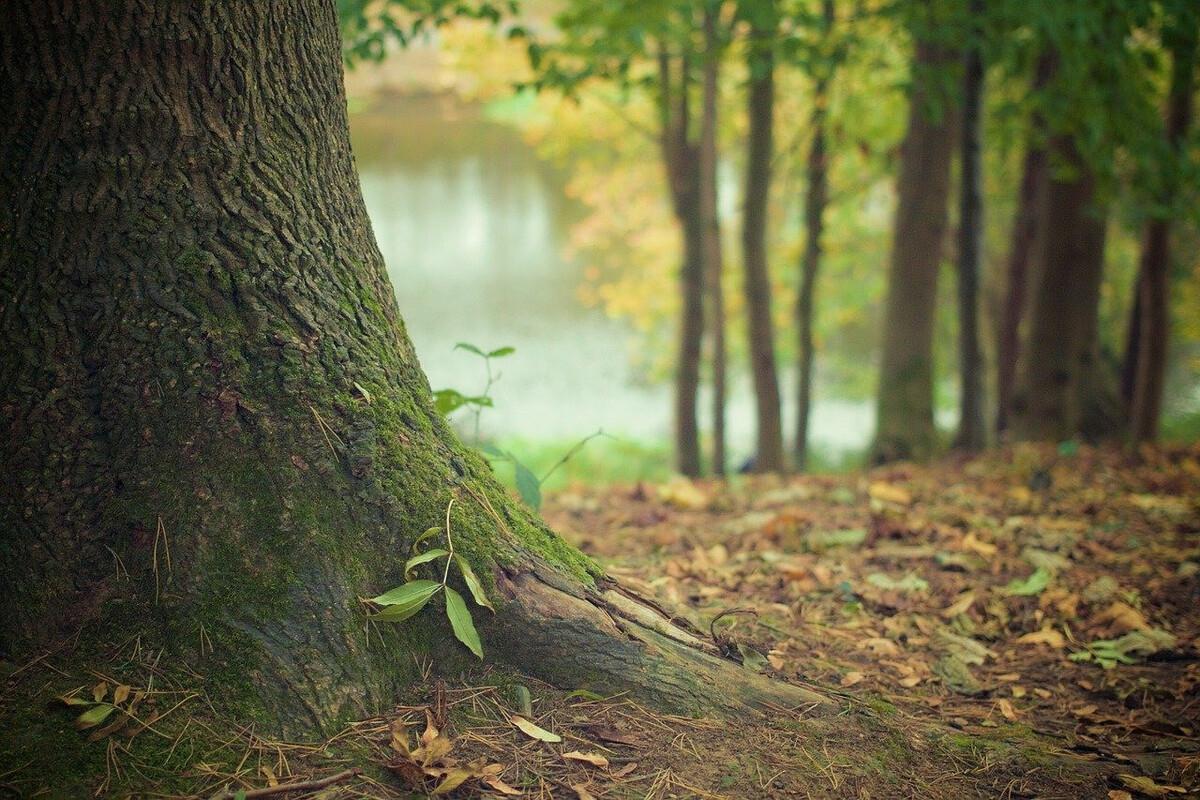 Caen débitume le pied des arbres pour verdir ses trottoirs