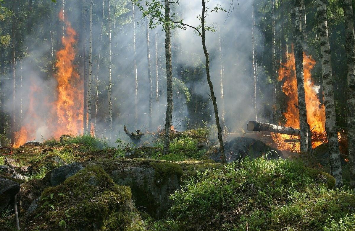 Déforestation importée: les ONG pointent les engagements non tenus de la France