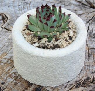 Embelium, un matériau écologique qui remplace les mousses plastiques