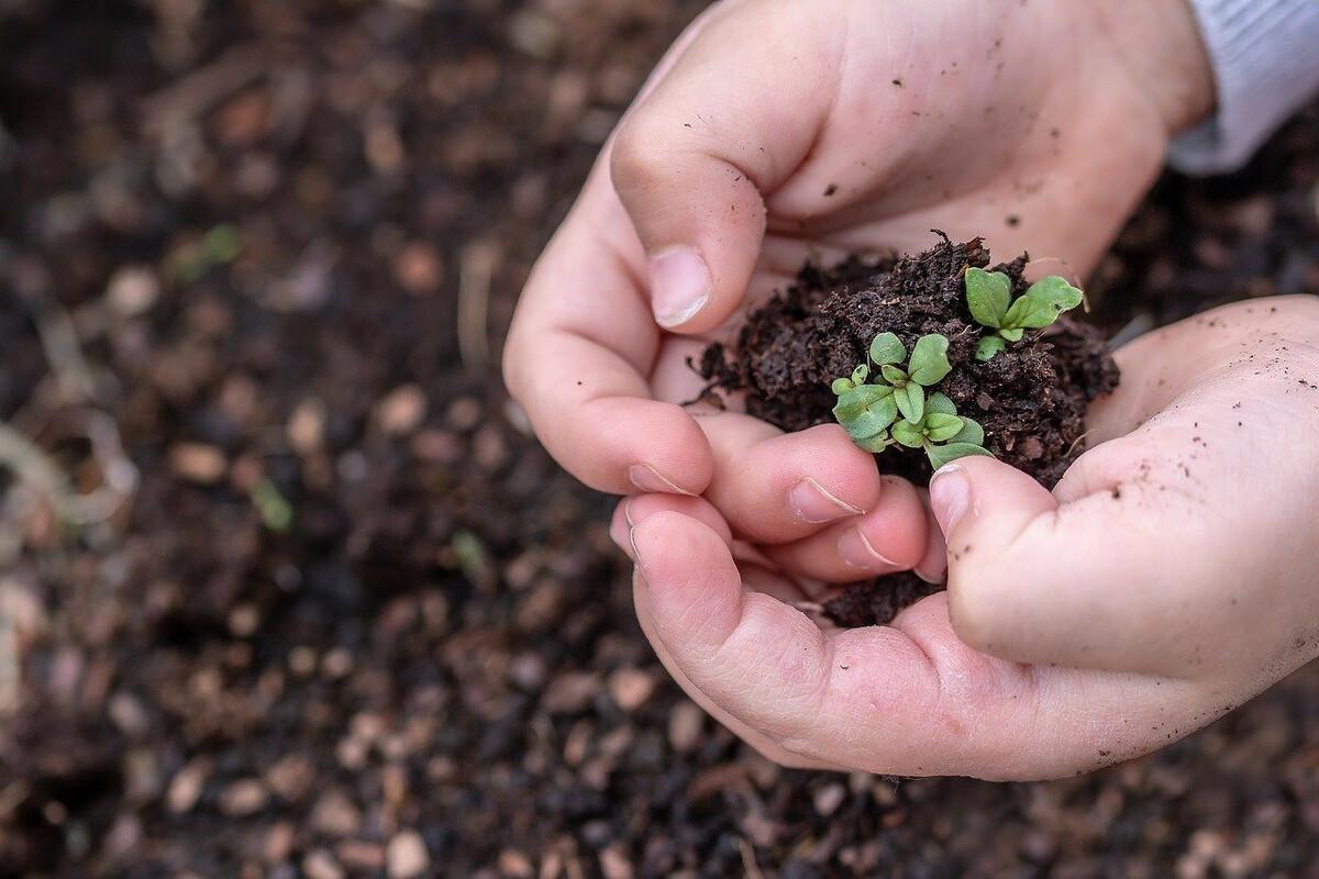 Que faut-il semer en février au potager?