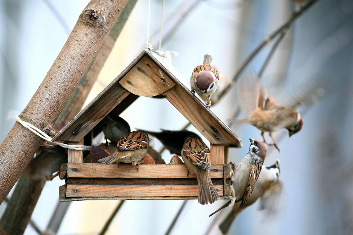 DIY: créer un refuge pour les oiseaux chez soi