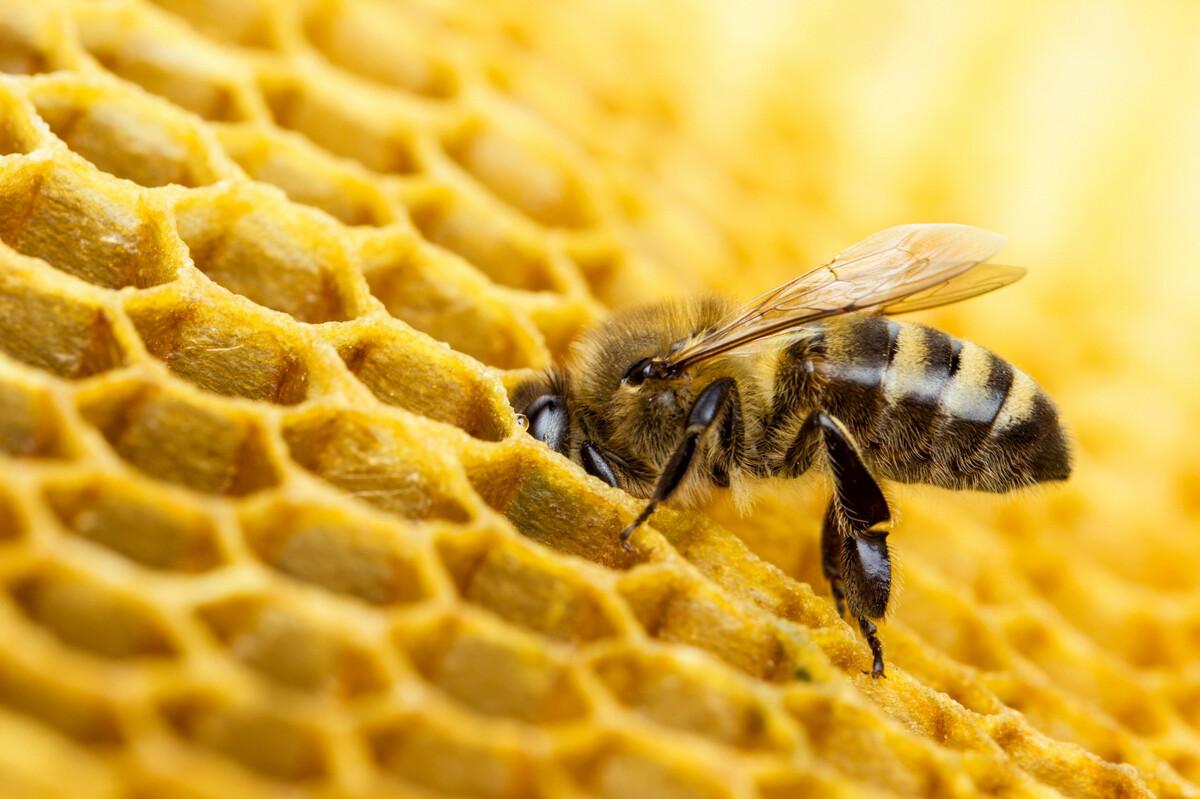 Fabriquer une ruche horizontale: outils, matériaux, découpes, assemblage