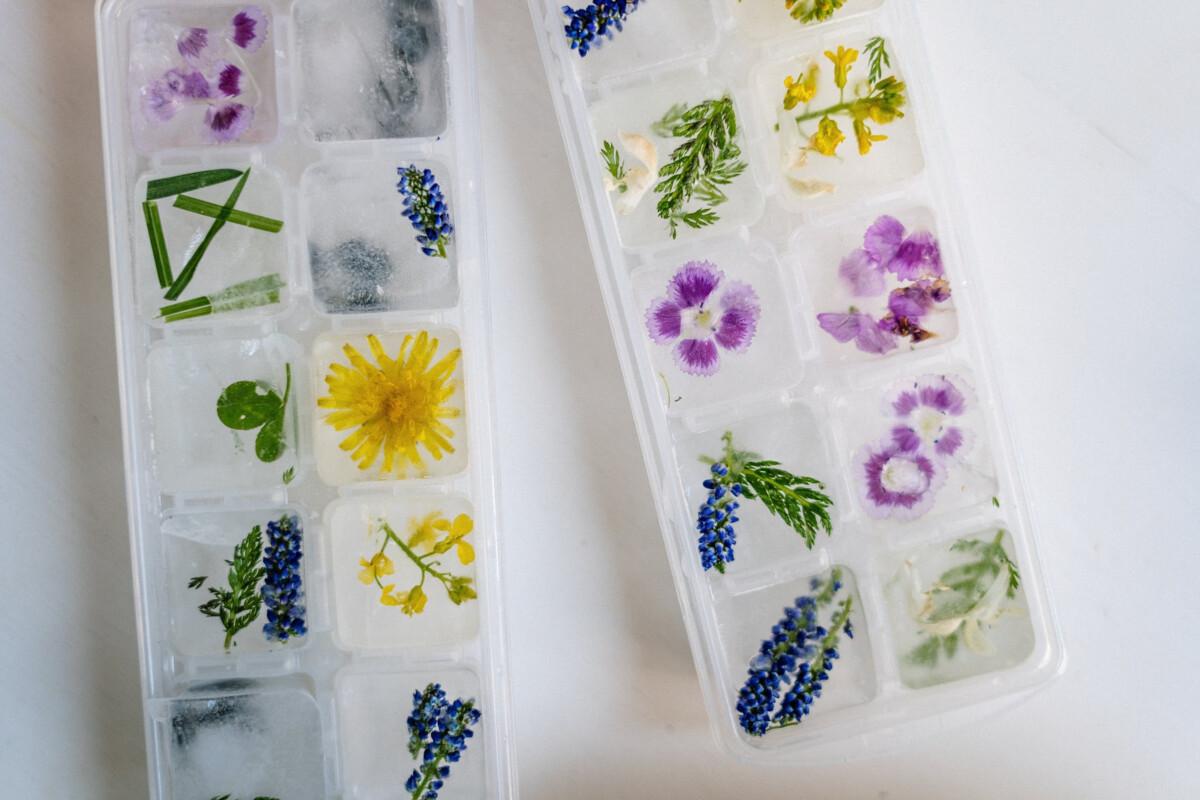 Préparer des glaçons avec des fleurs comestibles