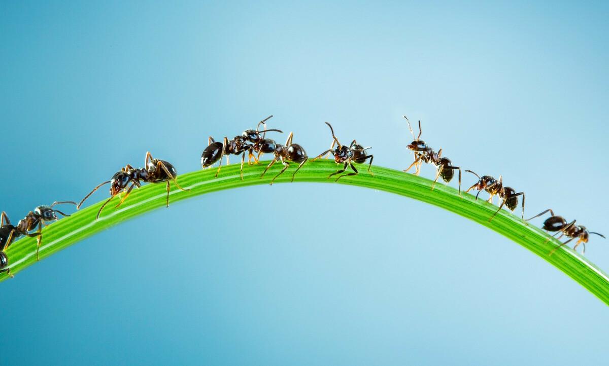8 solutions naturelles pour chasser les fourmis de sa maison