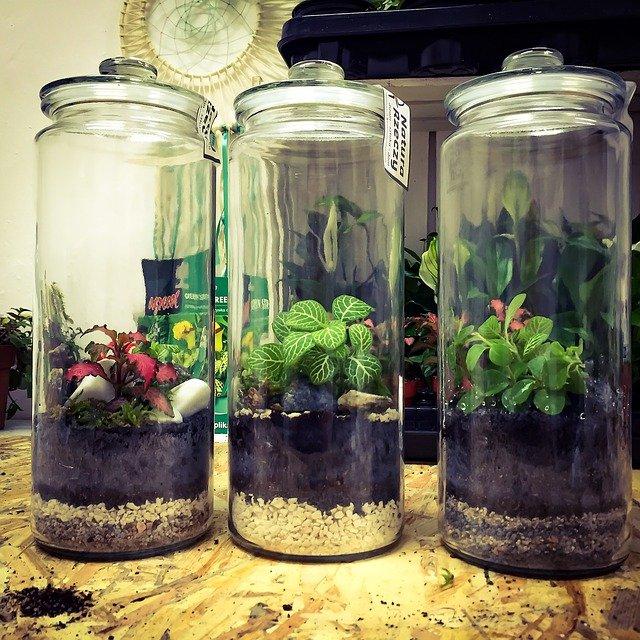 Pots en verre pour plantes grasses