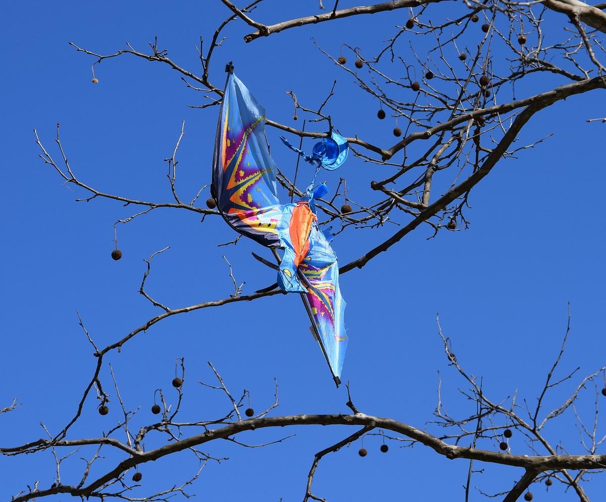 Cerf-volant dans un arbre