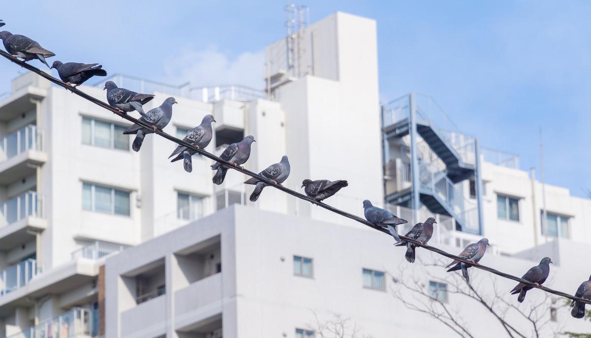 Observer les oiseaux
