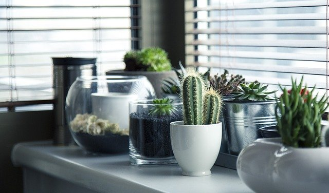 Vases pot en verre