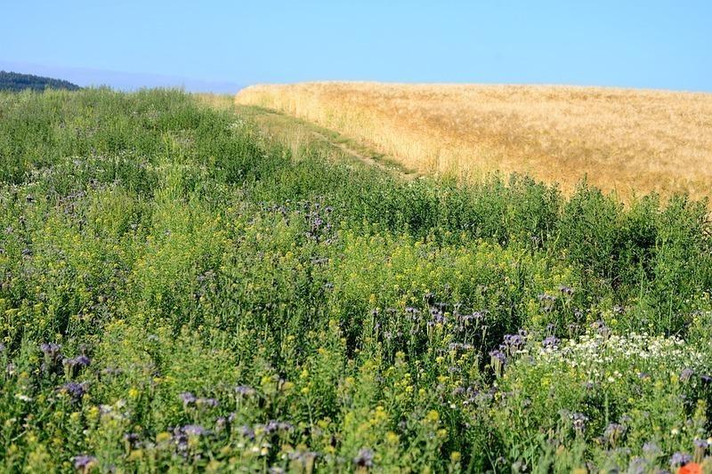 Agriculture écolo