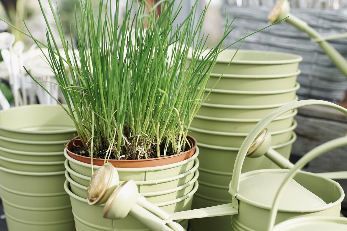 Replanter des herbes aromatiques